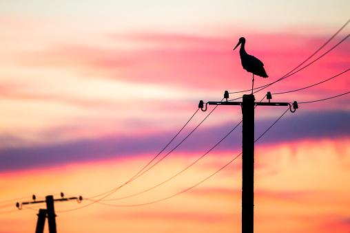 Electricity Pylon「White stork on electricity pylon at sunset」:スマホ壁紙(3)