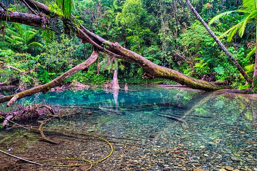 Queensland「Pool In The Daintree Rainforest National Park」:スマホ壁紙(18)