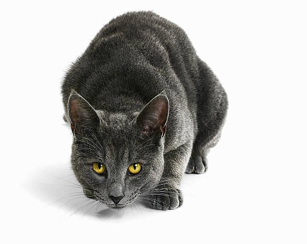 Cat Staring:スマホ壁紙(壁紙.com)