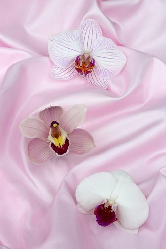 花「Three orchids in folds of pale pink silk」:スマホ壁紙(16)