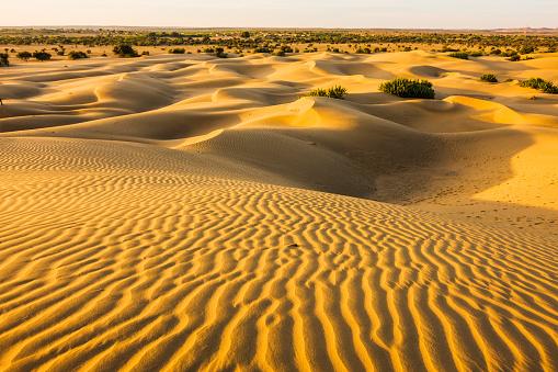 Rajasthan「Sand dunes near the village」:スマホ壁紙(0)