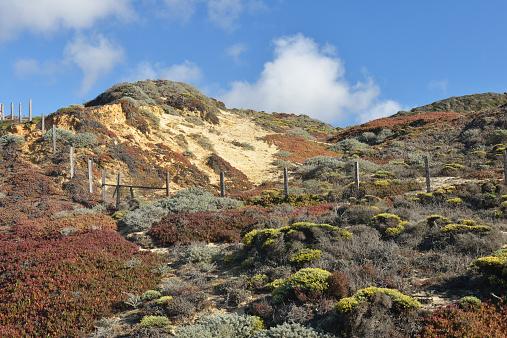 Big Sur「Sand dunes」:スマホ壁紙(5)
