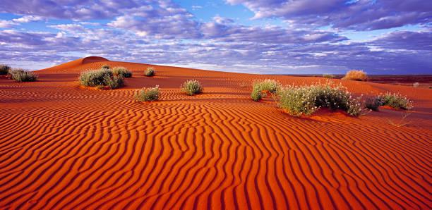 Sand dunes in the Simpson Desert:スマホ壁紙(壁紙.com)