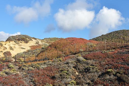 Big Sur「Sand dunes along Big Sur」:スマホ壁紙(6)