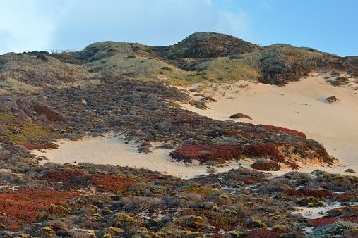 Big Sur「Sand dunes at Big Sur」:スマホ壁紙(3)