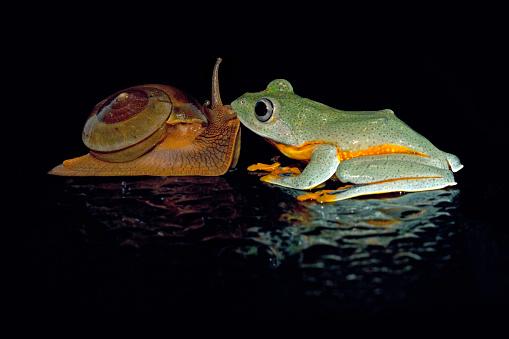 カタツムリ「Tree frog kissing a snail」:スマホ壁紙(6)