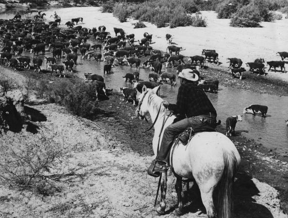 Arizona「Beef Herd」:写真・画像(11)[壁紙.com]