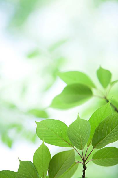 Fresh Leaves:スマホ壁紙(壁紙.com)