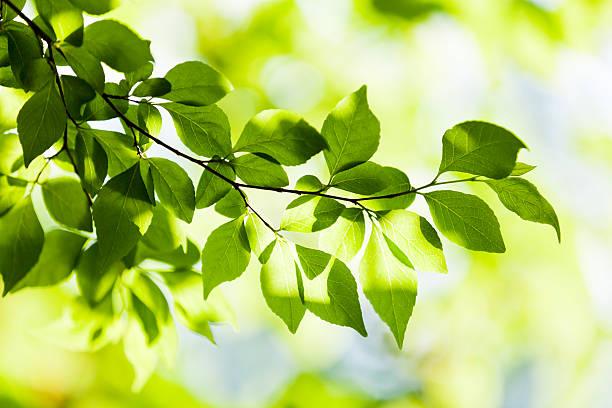 小さな緑のカーテンのまとめ:2013年01月14日(壁紙.com)