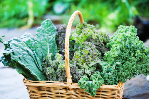 Harvesting「Basket of Freshly Harvested Kale Vegetable Varieties Close-up」:スマホ壁紙(5)