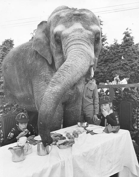 動物「Elephant For Tea」:写真・画像(17)[壁紙.com]