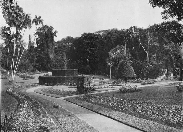 Footpath「'The Fernery, Peradeniya Gardens, Ceylon', c1890」:写真・画像(3)[壁紙.com]