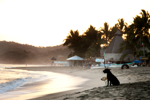 Sayulita「Two labrador retrievers watching the sunset.」:スマホ壁紙(7)