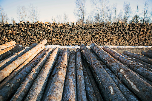Deforestation「Heaps of wood logs lying outdoors in lumber yard, Jackman, Maine, USA」:スマホ壁紙(5)
