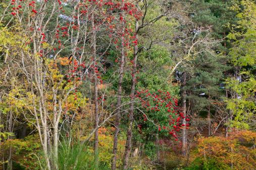 Rowanberry「Mixed autumn forest」:スマホ壁紙(18)