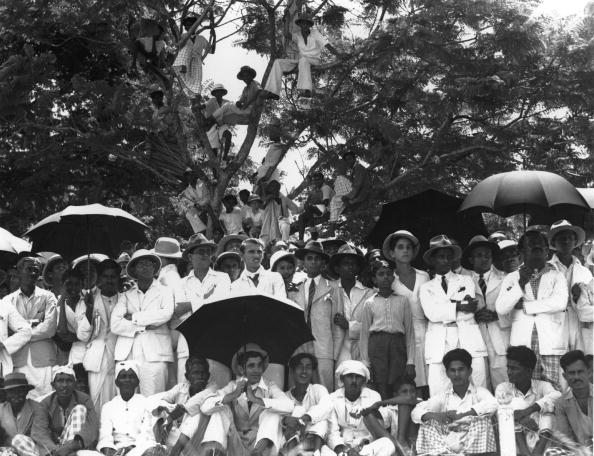 Sri Lanka「Watching From Tree」:写真・画像(16)[壁紙.com]