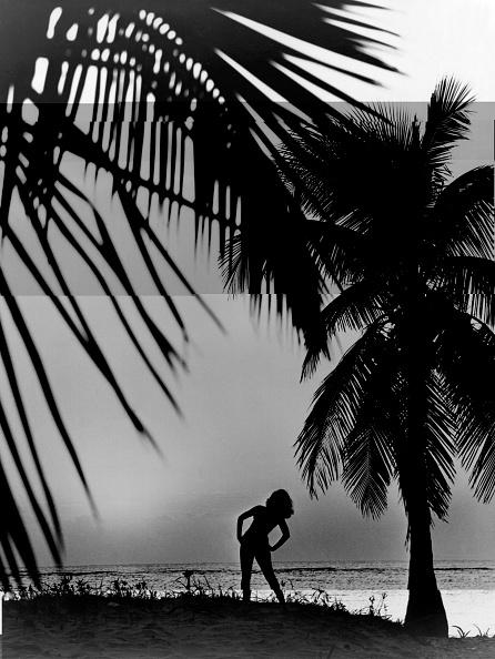 南国「Sunny Silhouette」:写真・画像(9)[壁紙.com]