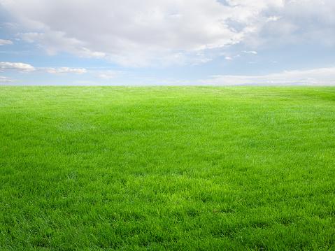 緑色「夏の景観、芝フィールドとスカイ」:スマホ壁紙(13)