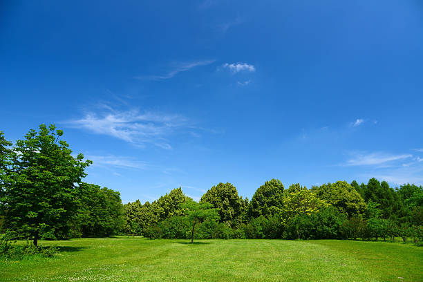 Summer Landscape:スマホ壁紙(壁紙.com)