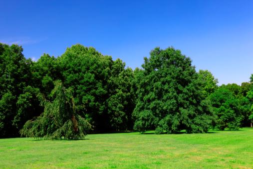 Reforestation「Summer Landscape」:スマホ壁紙(19)
