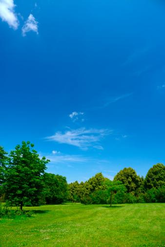 草地「夏の風景」:スマホ壁紙(3)