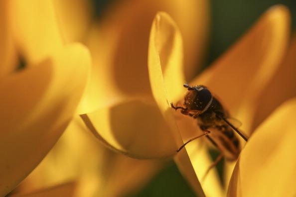 虫・昆虫「The First Signs Of Spring Appear In London」:写真・画像(14)[壁紙.com]