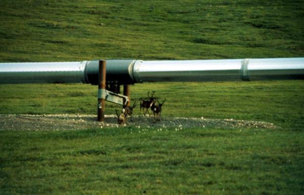 Arctic National Wildlife Refuge「Arctic National Wildlife Refuge Eyed for Oil Drilling」:写真・画像(1)[壁紙.com]