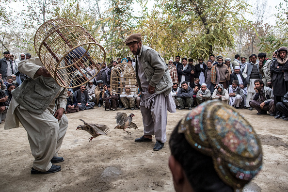 Kabul「Afghan Men Fight Partidges In Kabul」:写真・画像(10)[壁紙.com]