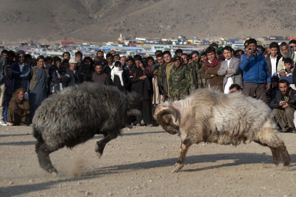Kabul「Afghans Watch Traditional Ram Fighting」:写真・画像(15)[壁紙.com]