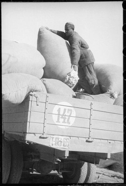 Uzbekistan「Loading Of Cotton」:写真・画像(14)[壁紙.com]