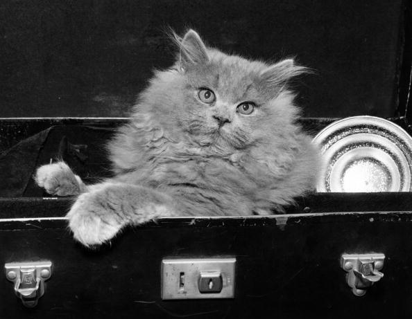 Cute「Cat Case」:写真・画像(4)[壁紙.com]
