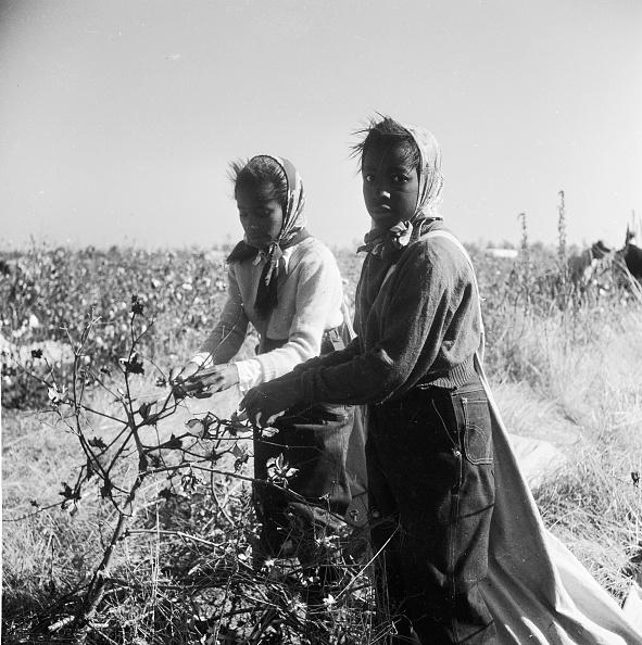 Cotton「Cotton Plantation」:写真・画像(8)[壁紙.com]
