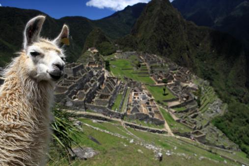 Alpaca「Lovely Llama and Macchu Picchu」:スマホ壁紙(5)