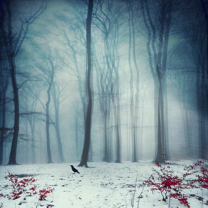 Dizzy「Foggy winter forest, digitally manipulated」:スマホ壁紙(2)
