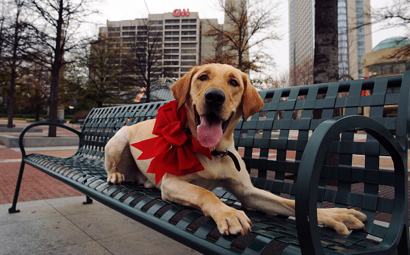 "Famous Place「Marley, the Dog from ""Marley and Me"", Visits Various Atlanta Landmarks」:写真・画像(9)[壁紙.com]"