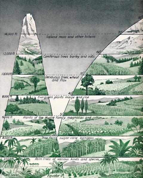 Variation「The Different Zones Of Vegetation」:写真・画像(7)[壁紙.com]