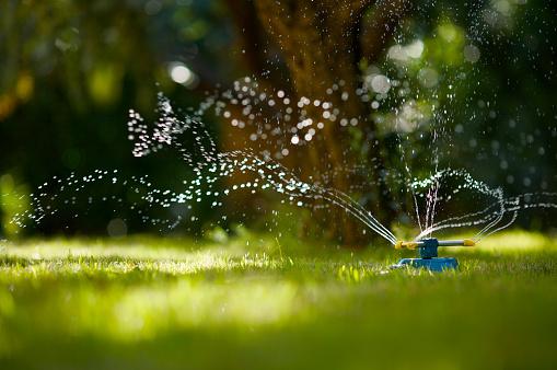 Gardening「Garden Hose Sprinkler」:スマホ壁紙(15)