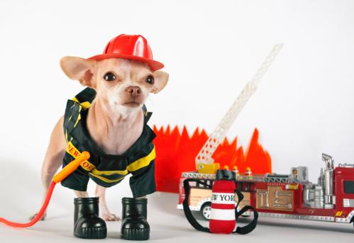 Pets「fireman」:スマホ壁紙(8)