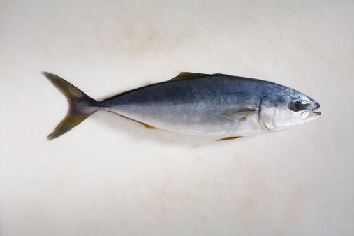 イエローキャブ「small yellowfin tuna」:スマホ壁紙(19)