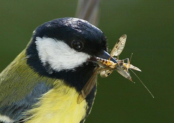 Beak「UK Conducts Insect Survey」:写真・画像(16)[壁紙.com]