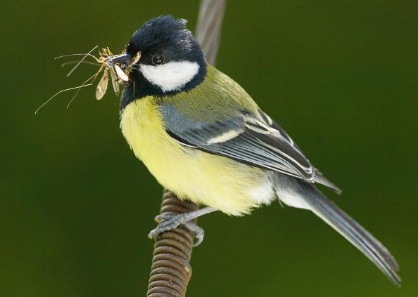 Beak「UK Conducts Insect Survey」:写真・画像(0)[壁紙.com]