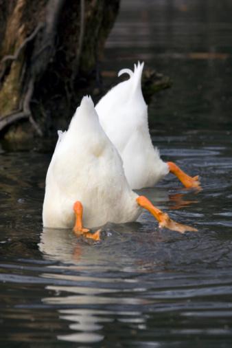 Out Of Context「Top Down Duck」:スマホ壁紙(12)