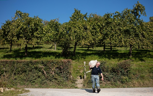 Land「Cider Makers Expecting Bumper Apple Crop This Autumn」:写真・画像(13)[壁紙.com]