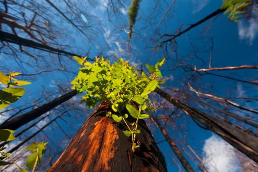 Deforestation「New growth after bushfire」:スマホ壁紙(9)