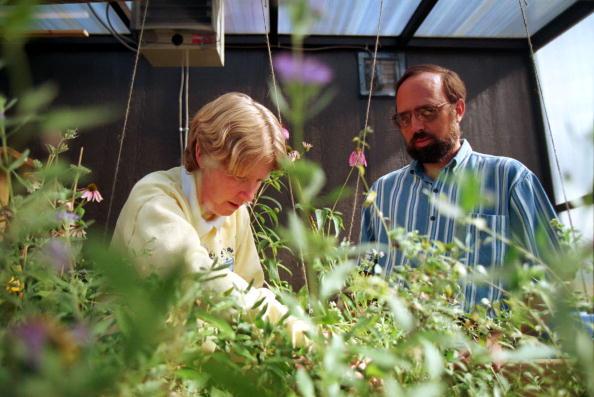 Sandia Mountains「Bee land mine detection experiment」:写真・画像(4)[壁紙.com]