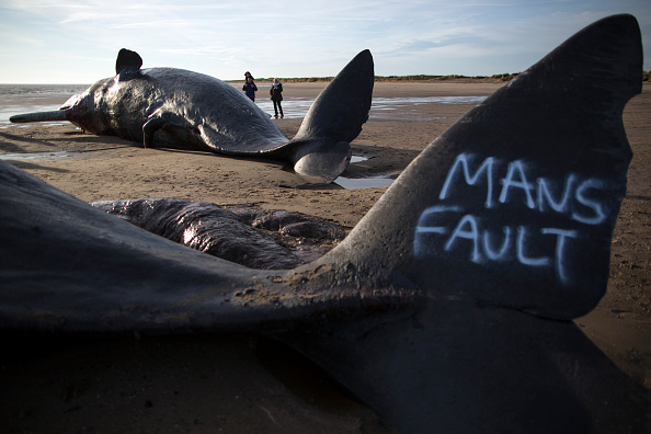 Whale「Sperm Whales Beached In Skegness」:写真・画像(19)[壁紙.com]