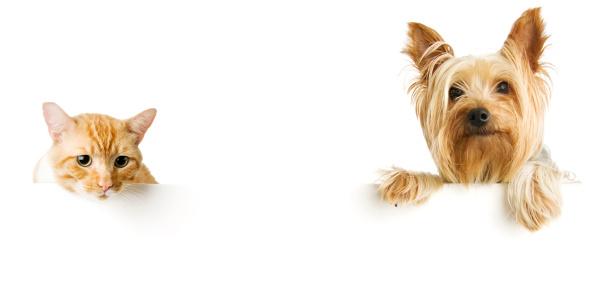 Smiling「Cat and Dog」:スマホ壁紙(14)