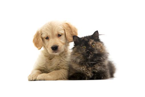 Kitten「猫と犬」:スマホ壁紙(9)