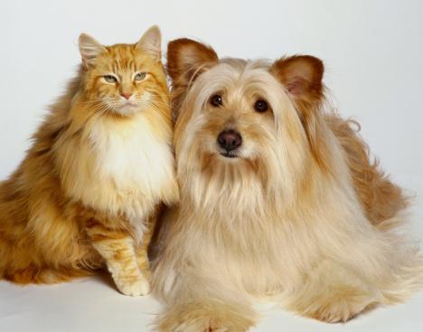 Cat「Cat and Dog」:スマホ壁紙(4)