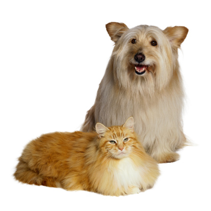 Mixed-Breed Cat「Cat and Dog」:スマホ壁紙(14)